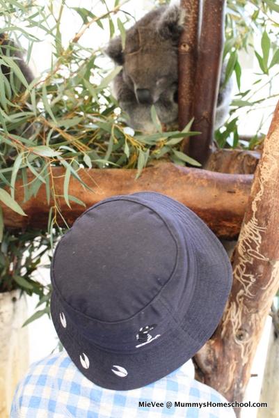 Perth koala