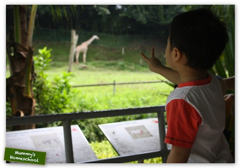 Mummy's Homeschool Vee 3 years 9 months old Zoo Negara