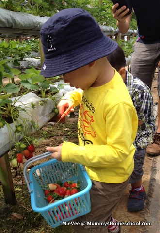 Vee 4 years 4 months Genting Strawberry Farm